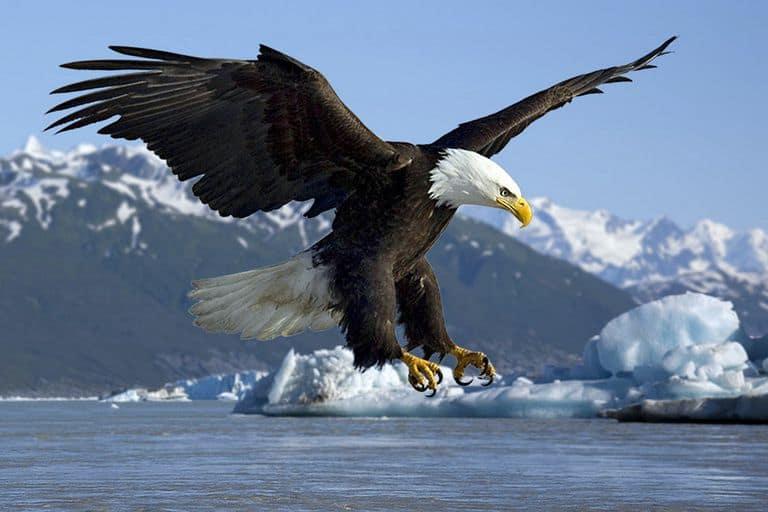 Chim Sẻ thì không thể hiểu được suy nghĩ của Đại Bàng