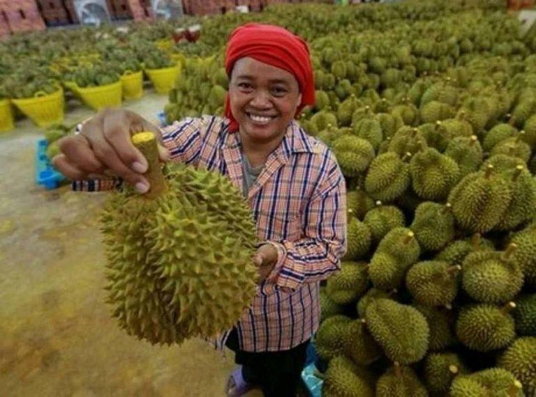 Vì sao nông sản Việt Nam thua ngay trên đất Việt Nam?