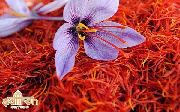 Saffron là gì? Vì sao nó được xem là gia vị đắt tiền nhất thế giới?