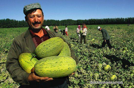 Nền nông nghiệp Trung Quốc nuôi hơn 1 tỷ dân của họ như thế nào?